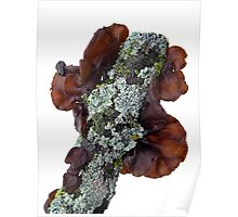 Black Witch's Butter with Lichen On the Side Poster