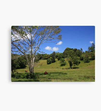 Tallebudgera Valley, SE Queensland. Canvas Print