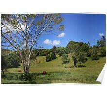Tallebudgera Valley, SE Queensland. Poster