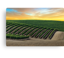 Golden Skies over Napa Valley Canvas Print