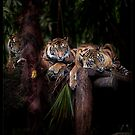 Brothers by ArtX