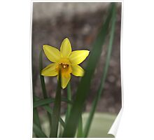 Hello Spring!  Poster