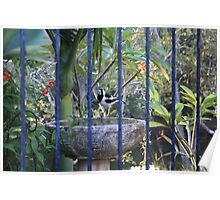 Peewee Through The Pool Fence Poster