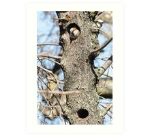 bunk bed sparrow holes Art Print