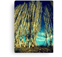 The Cloud Reaching Trees : Washington Canvas Print