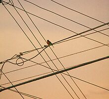 Bird on a Wire by John Toxey