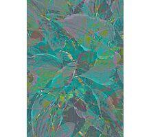 Layered palm  Photographic Print