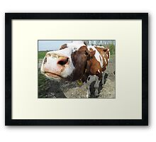 Cows#1 Framed Print