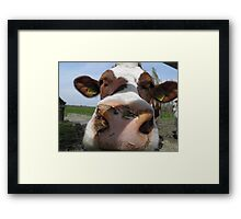 Cows#2 Framed Print