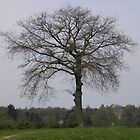 Netherlands Tree in Field by ZanHanhof