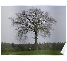 Netherlands Tree in Field Poster