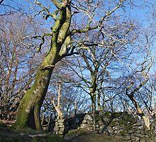 Mawddach Trail No1 by StephenRB