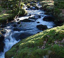 Mawddach Trail No2 by StephenRB