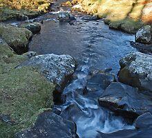 Mawddach Trail No3 by StephenRB
