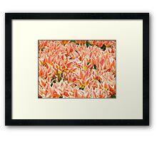 Flowers of the Netherlands Framed Print