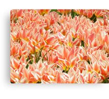 Flowers of the Netherlands Canvas Print