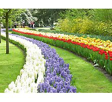 Netherlands Flowers Photographic Print