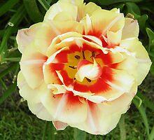 Netherlands Flowers by ZanHanhof