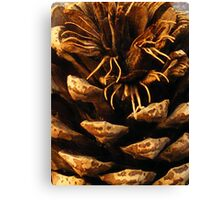 Pinecone; Floral time series. Canvas Print