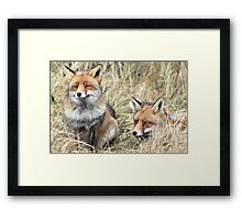 Foxes - 1716 Framed Print