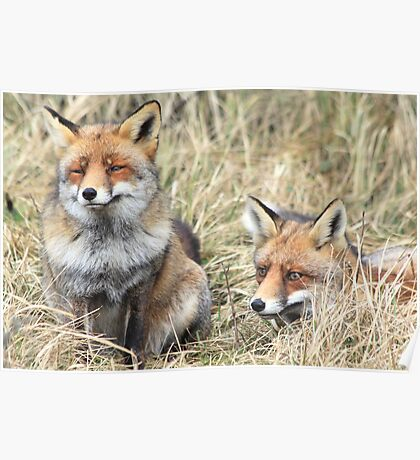 Foxes - 1716 Poster