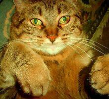 Rub my belly please!!! by Dmarie Frankulin