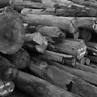 Pile of Timber by Stuart  Hardy