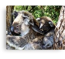 Holdin on to mum - Victoria Canvas Print