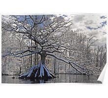 Remarkable Tree in Winter Poster