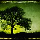 Lone Tree by Stephen Morris