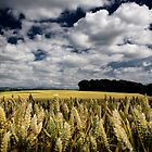 Angry Wheat, Co Kildare, Ireland. by 2cimage