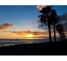 Tenerife Palms Photographic Print