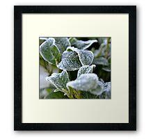 Gardenia in Waiting Framed Print