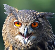 Hello My Name is Hoot. What's Your's? by imagetj