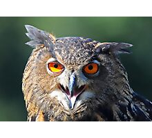 Hello My Name is Hoot. What's Your's? Photographic Print