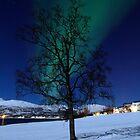 Tree & Aurora Borealis by Frank Olsen