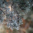 Frosted pinetrees. II by Bluesrose