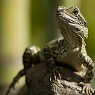 Water Dragon by Lesley Williamson