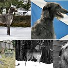 a celebration o deerhounds by joak