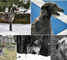 a celebration o deerhounds by joak