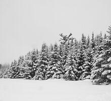 Deep Snow #2 by marchello