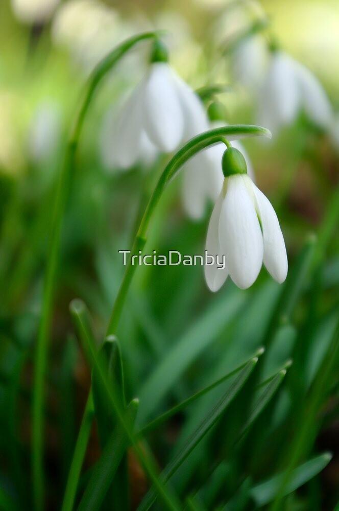 Snowdroplets by TriciaDanby
