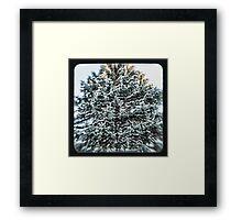 coniferous Framed Print