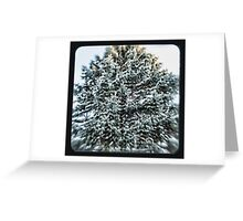 coniferous Greeting Card
