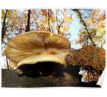 Scenic Oyster Mushrooms Poster