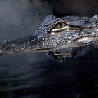 Later Gator by MissMargaret