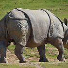 Rhino by Anne Smyth