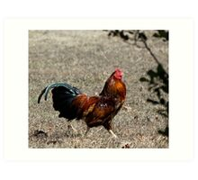 Rue of the rooster  Art Print