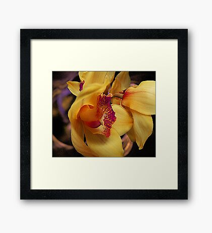 Orchid View Framed Print