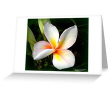 Plumeria Romance Greeting Card